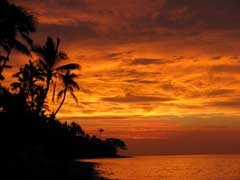 Fiji Coconut Palm Sunset010