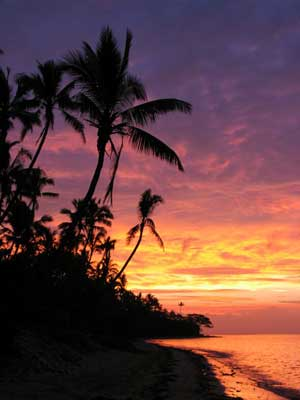 Fiji Coconut Palm Sunset011
