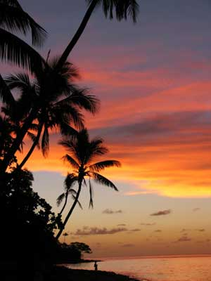 Fiji Coconut Palm Sunset014
