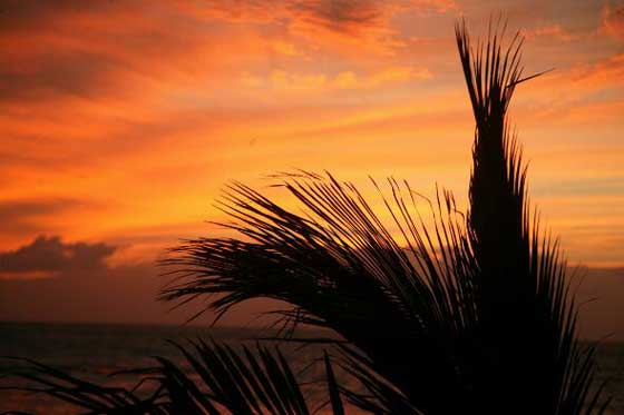 Tenerife Palm Sunset003