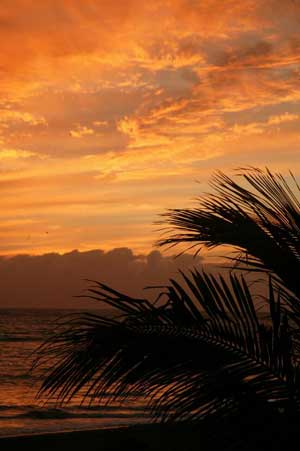 Tenerife Palm Sunset004