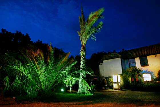 tropicallandscapesuk3web1night.jpg